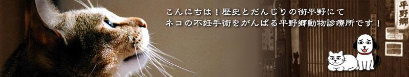 大阪市平野区でネコの不妊手術をがんばる動物診療所です!