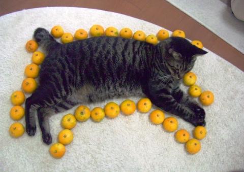 ネコ型 (5)