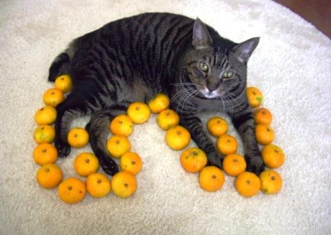 ネコ型 (4)