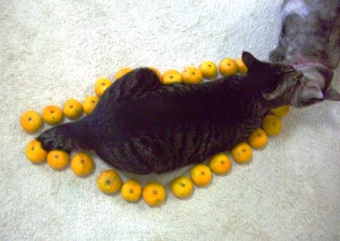 ネコ型 (6)